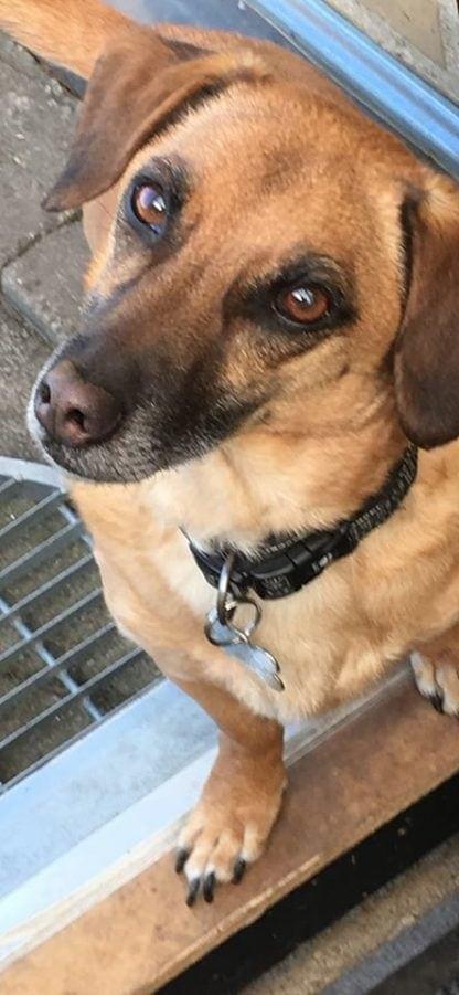 Hund med hundetegn formet som kødben.