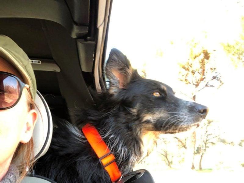 Hund på kørertur i det syd-franske landskab